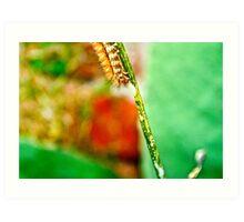 The Hungry Little Caterpillar.. Art Print