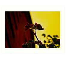 Every Rose Has It's Thorn Art Print