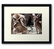 Boomer and Mate Framed Print