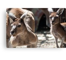 Boomer and Mate Canvas Print