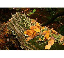 Autumn Log Down Under Photographic Print