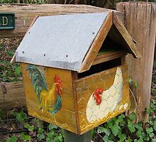 Chook Box # 5 by Penny Smith