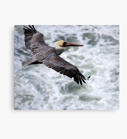 Soaring Above The Seas.... Canvas Print