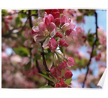 Beyond my garden...perfumed delights Poster