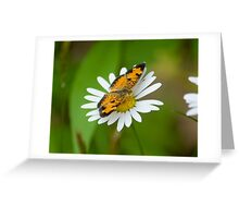 A Little crescentspot Daisy Topper Greeting Card
