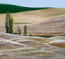 Palouse Landscape by Lynnette Peizer