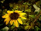 Fall's Last Flower by Lucinda Walter