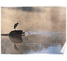 Beautiful bird at sunrise Poster