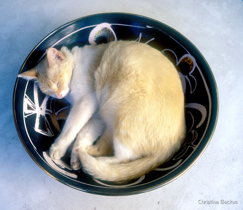 Jasper in the Russian Bowl by Christina Backus