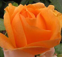 Orange Julius by Sarah Trent