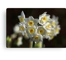 Jonquils White and Yellow Canvas Print