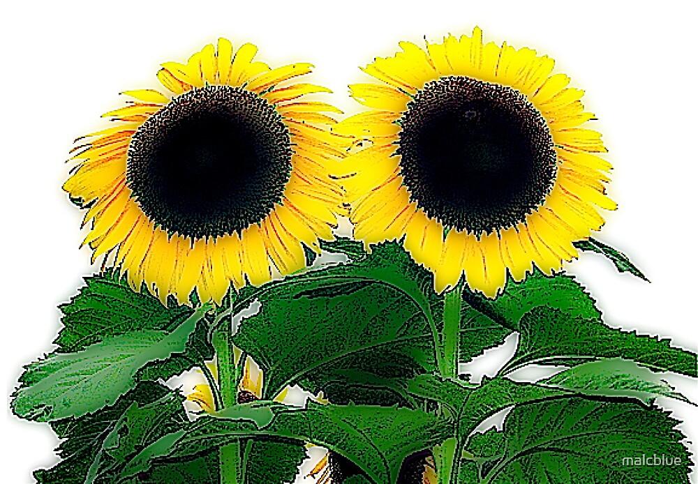 Sunflower twins by malcblue