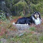 Collie in Autumn by CitC