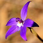 Purple Cuckatoo Orchid - Para Wirra Recreation Park, SA by Michael Tapping