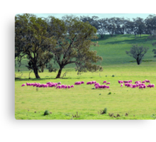 Breast Cancer Aware Sheep (please view larger) Canvas Print