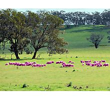 Breast Cancer Aware Sheep (please view larger) Photographic Print