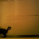 huge window, tiny cat by catnip addict manor