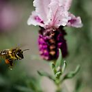 Honey In flight by Jessica Millman