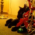 to hell with politcal correctness, MERRY EFFING CHRISTMAS!!! by catnip addict manor