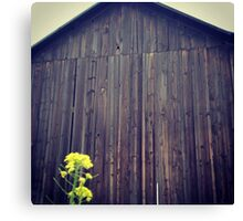 Distressed Old Barn with Yellow Wildflower Canvas Print