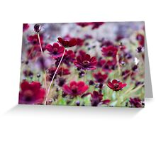 Dancing Cosmos Greeting Card