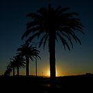 Palms At Sunset by David Cash