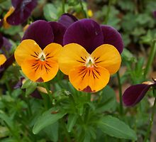 Purple and orange flowers by HannahCashmore