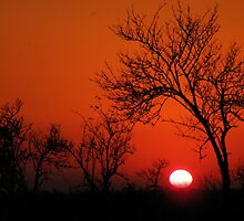 Good Night Sun by Jo Nijenhuis