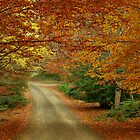 Follow me down the Autumn trail  by Sim Baker
