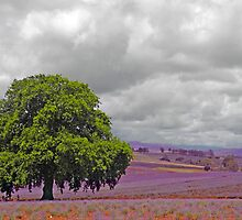 Oak Tree of Lavender Life  by Sim Baker