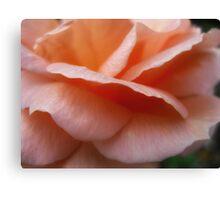 Peach Petals  Macro  Dads rose Canvas Print
