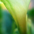 Green lily III by Terri-Anne Kingsley