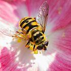 bee on flower by spetenfia