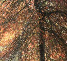 Autumn blaze, Mount Lofty Botanical Gardens,S.A. Sticker