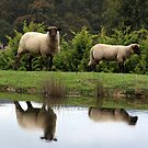 Farmyard Reflections by WendyJC