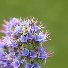 Buzzing about with purple and green by georgiegirl