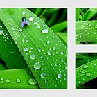 Rain Drops - In The Garden After Rainfall by Chris Goodwin