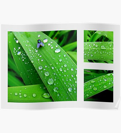 Rain Drops - In The Garden After Rainfall Poster