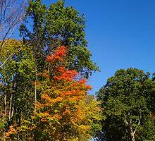 Autumn Beckons by Pamela Phelps