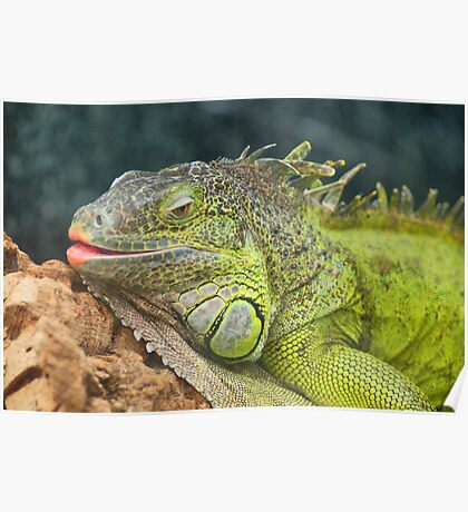 Bearded Dragon ~ Not The Mother-In-Law!! Poster