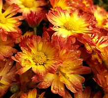 Autumn Mums by ArtBee