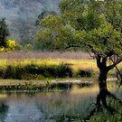 Bedlam Creek Wattle - NSW Australia by Bev Woodman