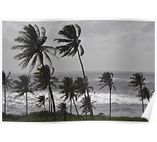 Silver water through coconut palms Poster