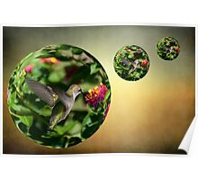 Humming Bird In A Bubble Poster