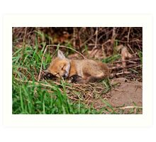 Fox Kit 9 Art Print