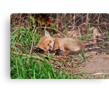 Fox Kit 9 Metal Print