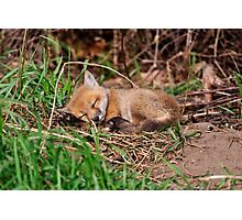 Fox Kit 9 Photographic Print