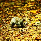 am i hiden in the leaves?!? by xxnatbxx