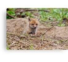 Fox Kit 10 Metal Print