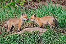 Fox Kits 11 by Michael Cummings